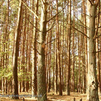 P Bauer woods 1 800x600