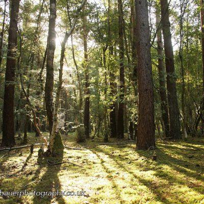 P Bauer woods 2 800x600