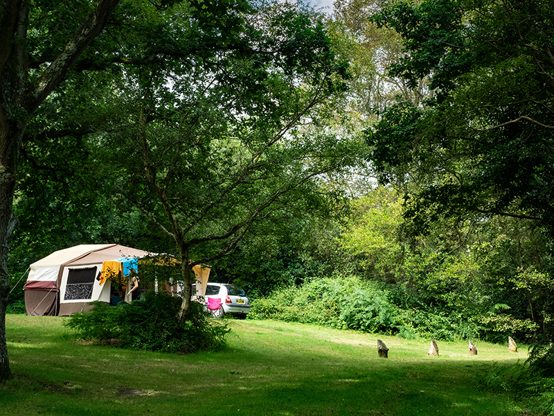 Wild Camping in a woodland glade