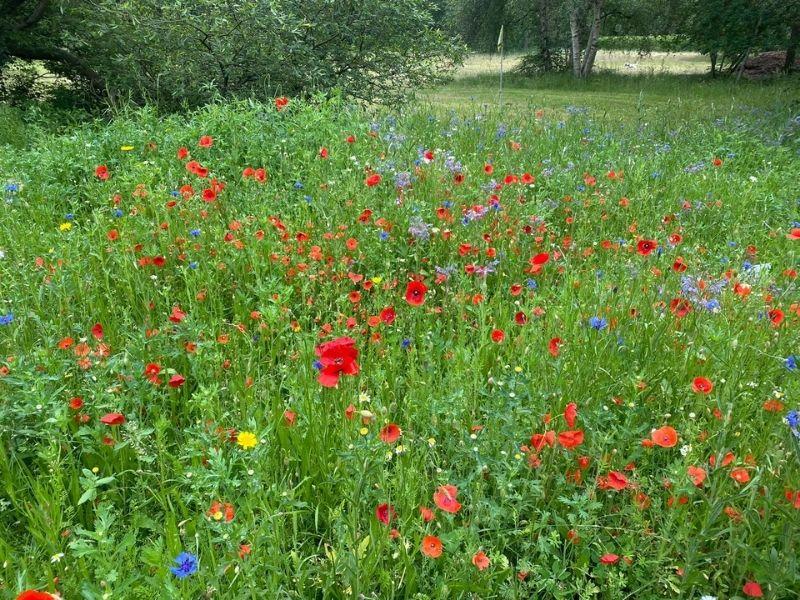 Wildflowers-30.6.21-800x600